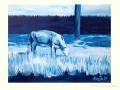 Koe in balijbos